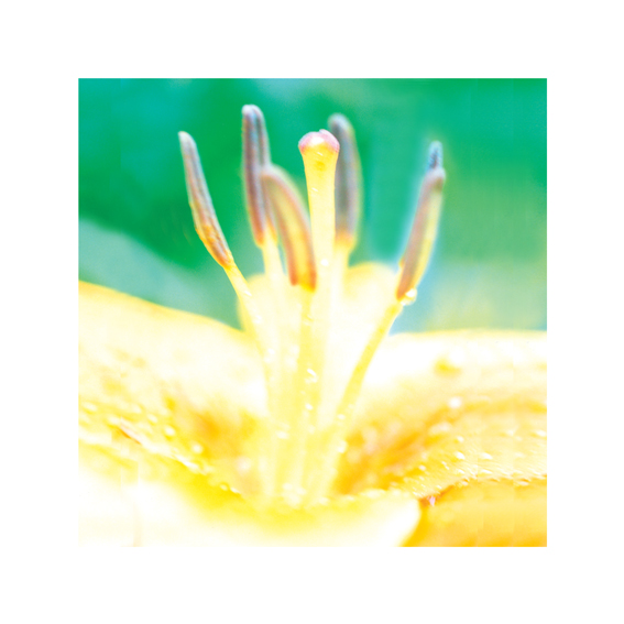 flower-card-10