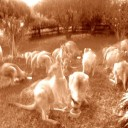 Roos being fed